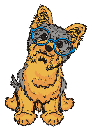 hair style: Yorkshire terrier in blue glasses