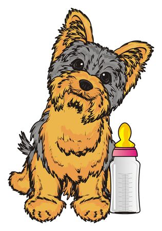 shaggy: Yorkshire terrier sit with bottle of milk