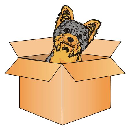 stick out: Snout of yorkshire terrier peek up from paper box