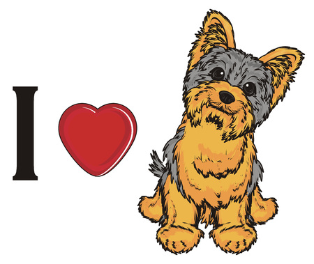I love yorkshire terrier