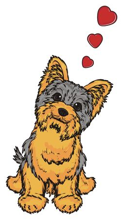 hair style: Yorkshire terrier in love sit Stock Photo
