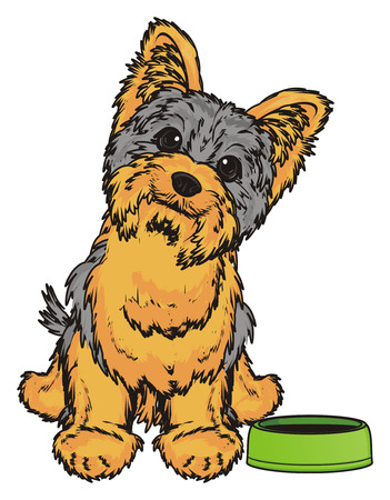 Yorkshire terrier sit and ask to feed him