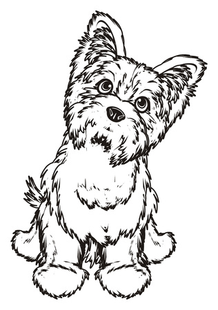 Coloring yorkshire terrier sit