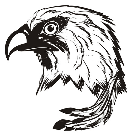 Cabezas De águilas Coloreadas Y No Coloreadas Fotos, Retratos ...