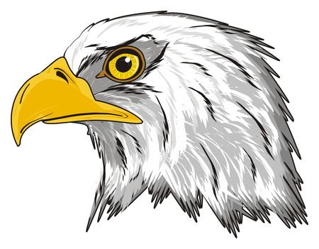 hoofd van de adelaar Stockfoto