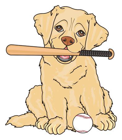 labrador want play to baseball Stock Photo