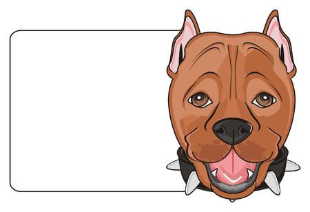kampfhund: Schnauze von pitbull mit sauberem Banner