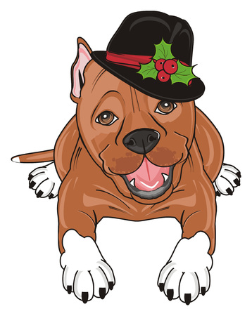 brown pitbull in black hat lying Stock Photo