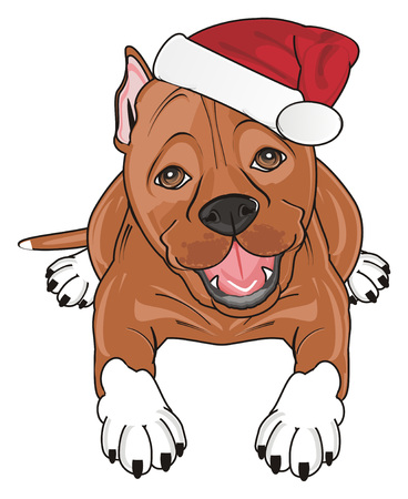 pitbull in red santa claus hat lying Stock Photo - 87333006