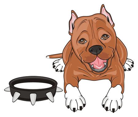 kind pitbull lying with large black collar