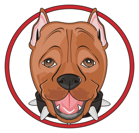 head of pitbull peek up from red road sign Stock Photo