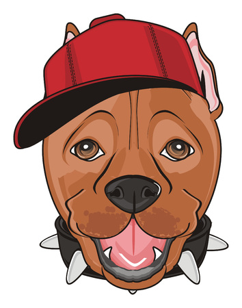 snout of pitbull in red cap