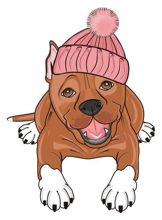 brown pitbull in warm hat lying