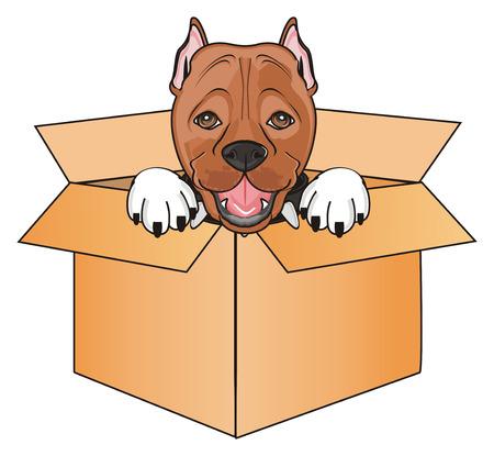 muzzle of pitbull peek up from paper box