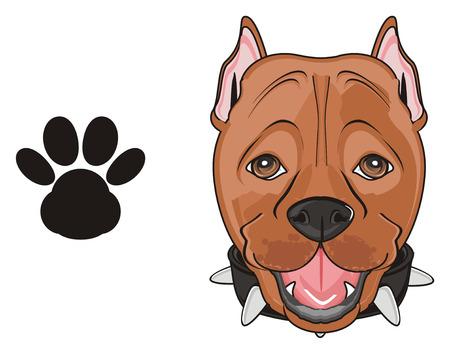 muzzle of a pitbull with a black footprint Stock Photo