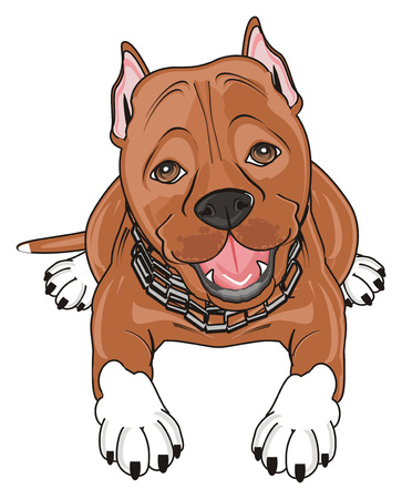 brown pitbull with chain on his neck