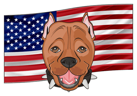 snout of pitbull and American flag