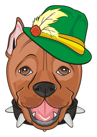 face of a pitbull in green hat