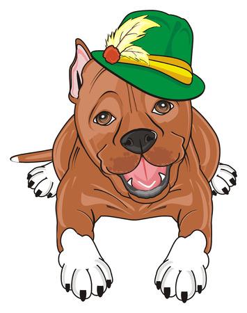 pitbull in green hat lying