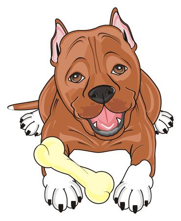 brown pitbull lying with a bone Stock Photo