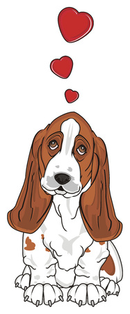 basset hound in love sit Stock Photo - 89119063