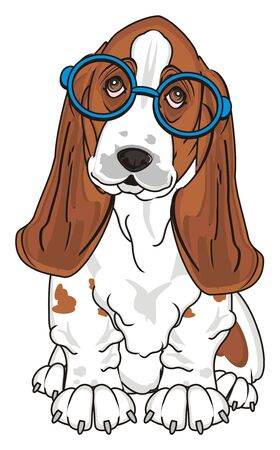 basset hound in blue glasses sit and watch