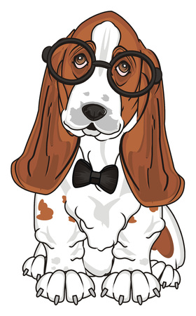 basset hound in black glasses and black bow sit