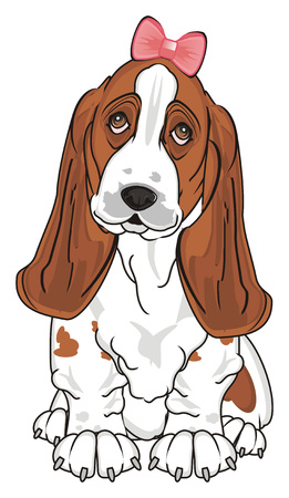 basset hound girl with pink bow sit