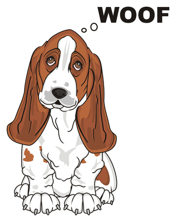 basset hound say woof Stock Photo