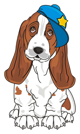 basset hound in cool blue cap sit and watch