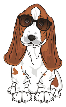 basset hound in black sunglasses sit