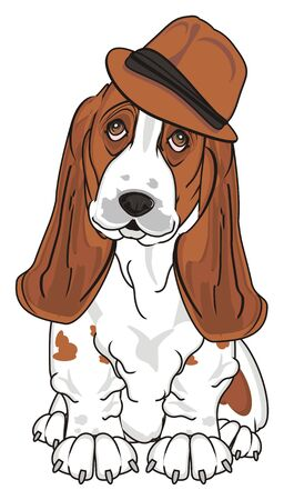 basset hound in brow hat sit Stock Photo