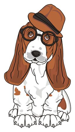basset hound in hat and glasses sit and watch