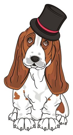 basset hound in black