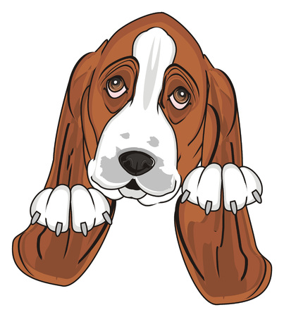 snout of basset hound with paws