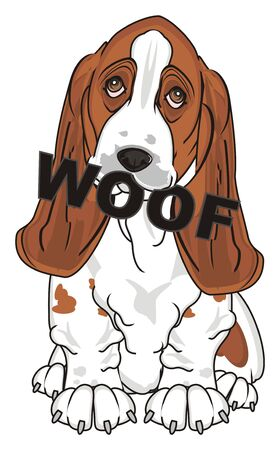 basset hound sit and hold word woof