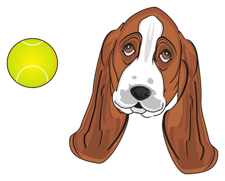 muzzle of basset hound with yellow ball