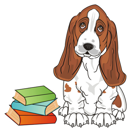 basset hound with books