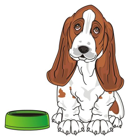 basset hound ask to feed him