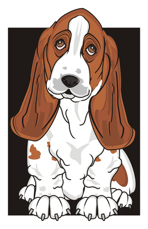 basset hound peek up from black poster Stock Photo