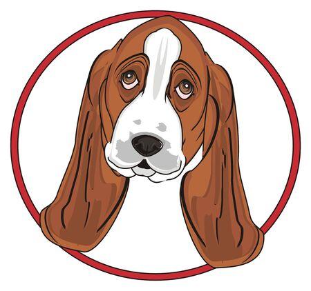 Il muso del basset hound fa capolino dal segno rosso Archivio Fotografico - 89119274