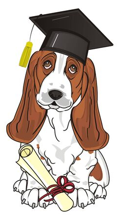 basset hound in hat with diploma