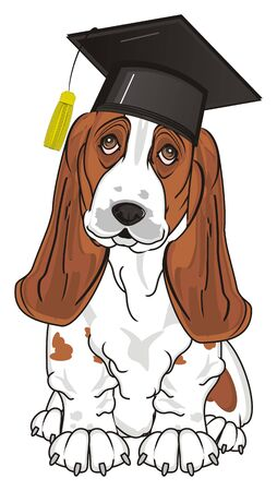 basset hound in black hat Stock Photo