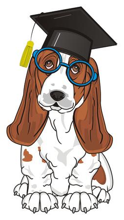basset: basset hound ready to study Stock Photo