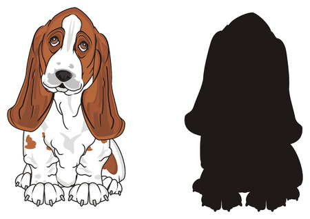 colored basset hound with solid black basset hound