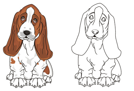colored basset hound with coloring basset hound