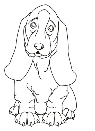coloring cute basset hound Stock Photo