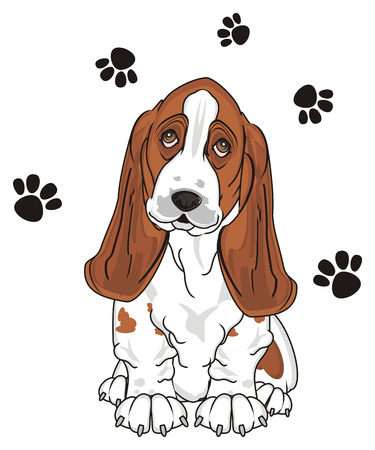 basset hound sit and many black footprints