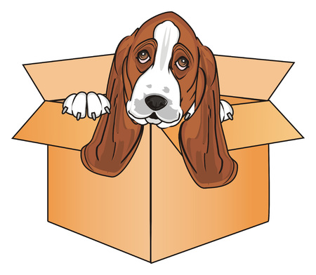 muzzle of basset hound peek up from paper box