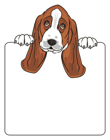 muzzle of basset hound hold a large clean paper